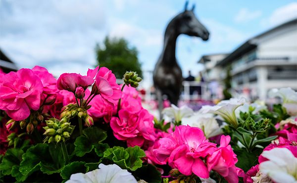 w660_1334962_flowers_horse_epsom_downs_summer_nights_19.jpg